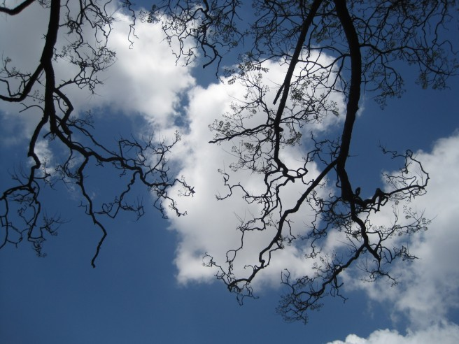 bare-jakaranda-branches-against-sky