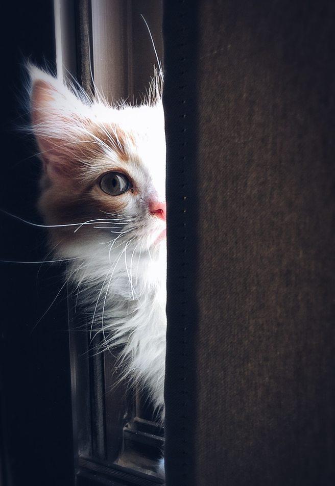adorable-animal-cat-320014.jpg