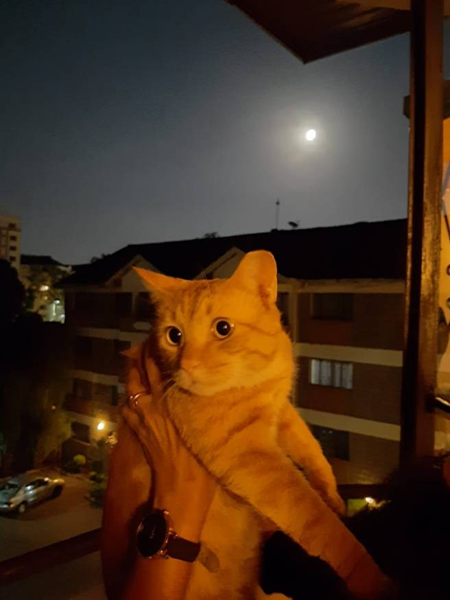 poetry by Sonya Kassam cat full moon
